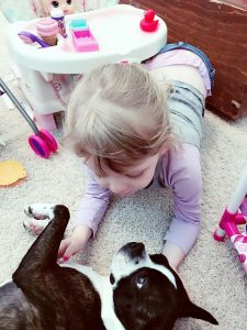 My Boston and Me - Anya playing with her babies